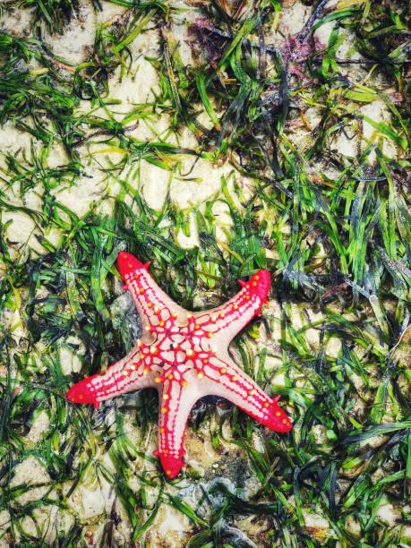 Beautiful starfish on the beach stock photo