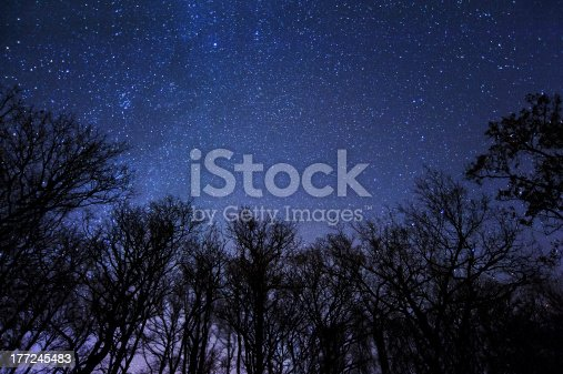 A frame of trees and stars in a beautiful night of new moon.