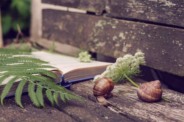 beautiful stillife with a book and plants - ślimak gastropoda zdjęcia i obrazy z banku zdjęć