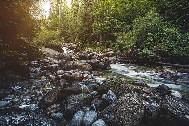 wunderschöne stream in bergen - bach stock-fotos und bilder