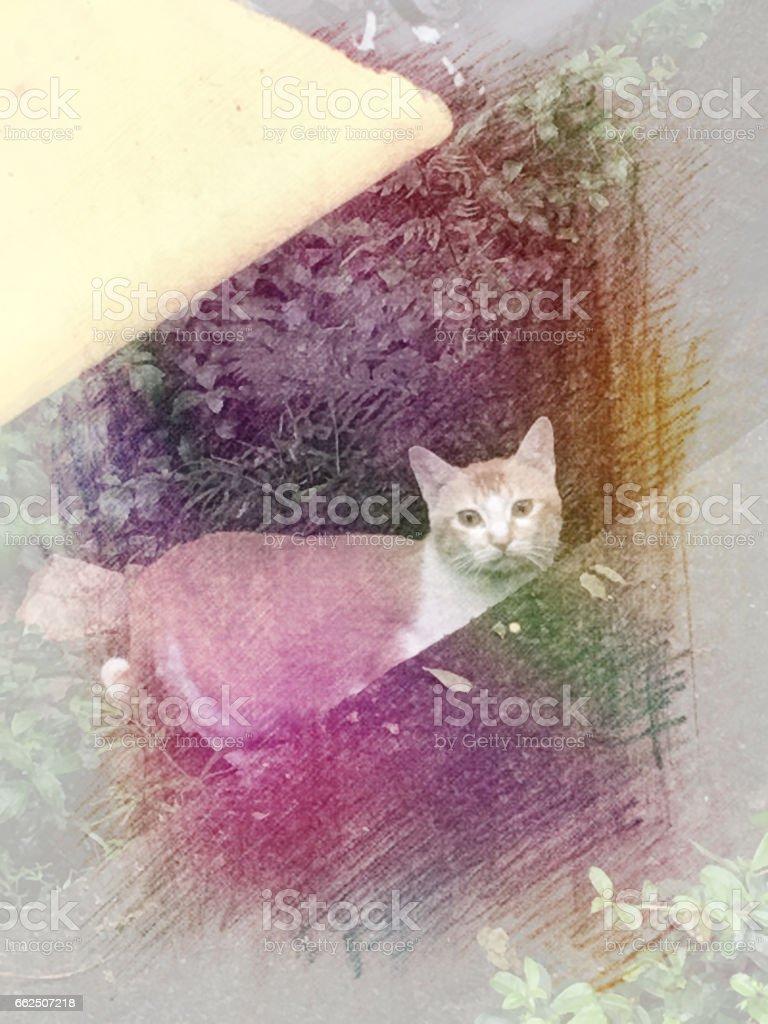 Beautiful StreetCats stock photo