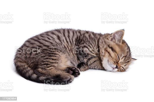 Beautiful striped kitten picture id177092654?b=1&k=6&m=177092654&s=612x612&h=ywghwmaa45giz5q0k2sbomqded0op qjcsf5yw8pwru=