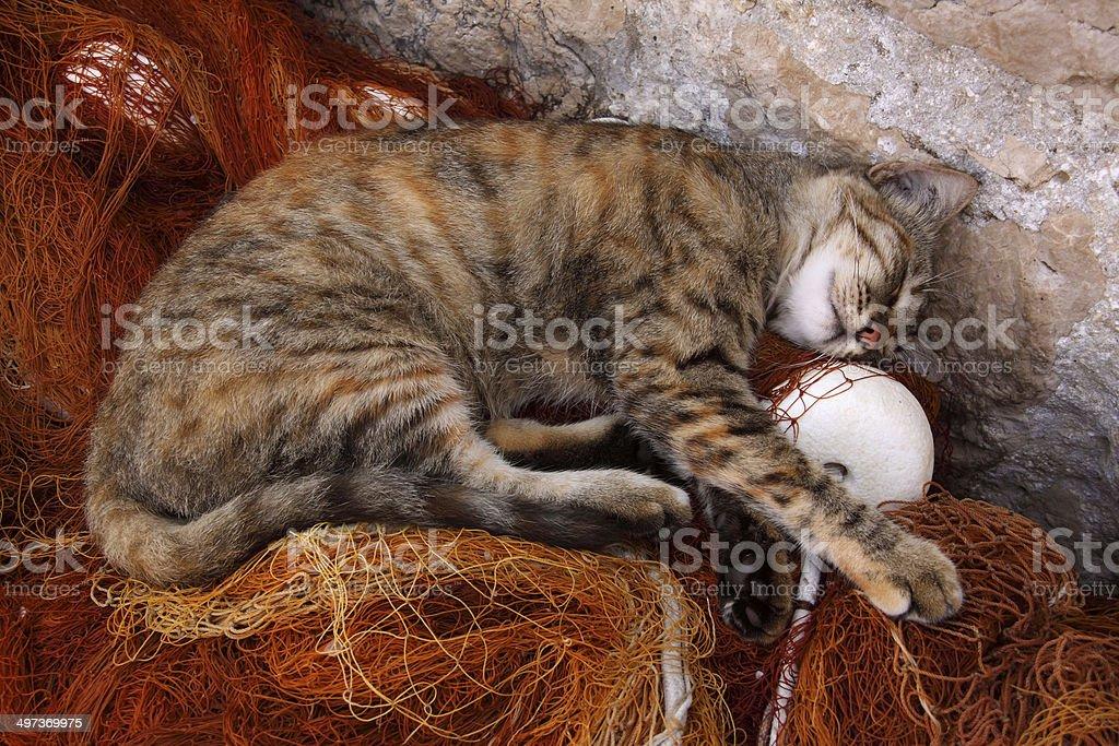 Beautiful striped tabby cat resting on fishing nets stock photo