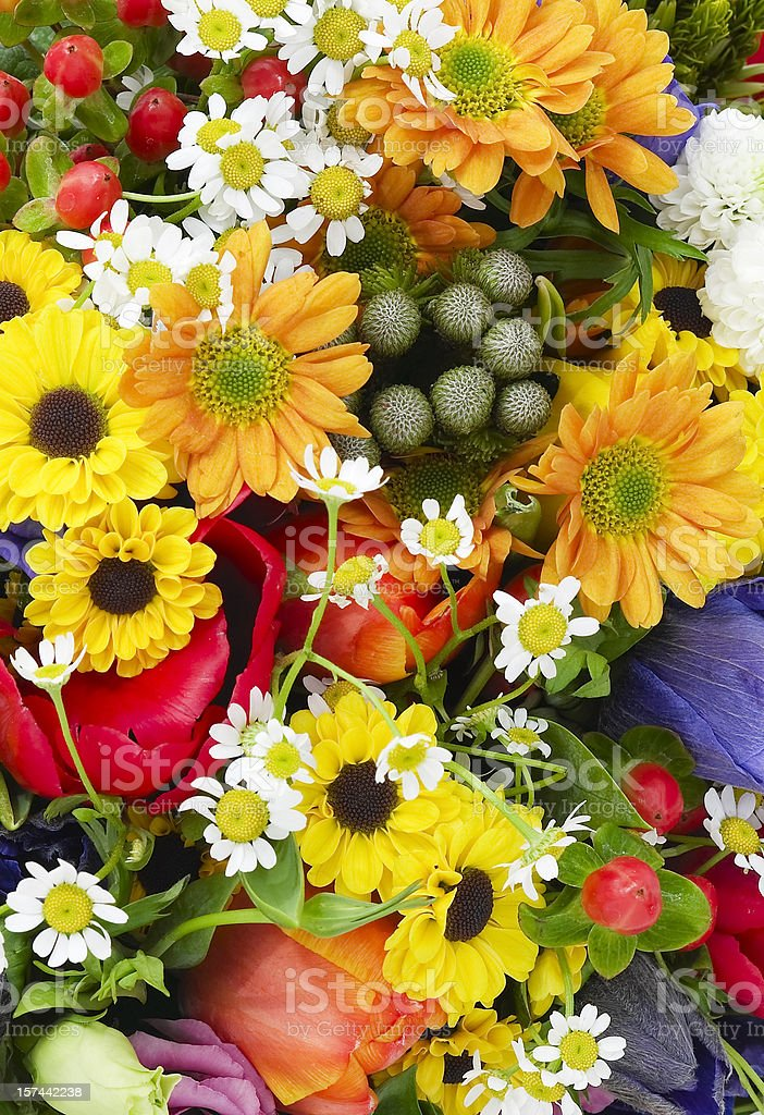 Beautiful studio photo of fresh flowers colorfully arranged stock photo