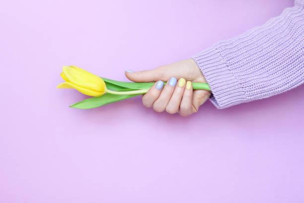 schöne stylische weibliche maniküre. tulpenblume. - gelnägel stock-fotos und bilder