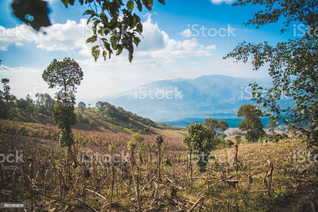 Montagnes et sur le terrain de la belle canne à sucre - Photo