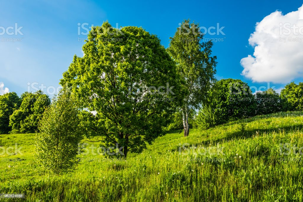 Beautiful summer countryside with hills, trees and sky with clouds - Royalty-free Agricultural Field Stock Photo