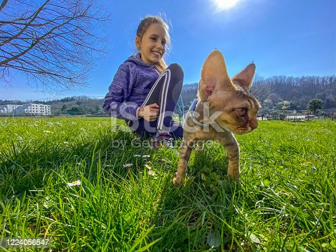 A Beautiful Summer Day with Cute Young Girl taking for a Walk her pretty Devon Rex Cat on a Field - Stock Photo
