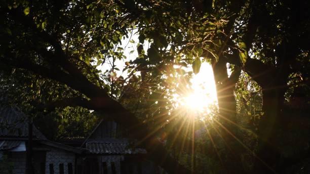 Beautiful summer evening in garden. Sun rays break through foliage of green tree stock photo
