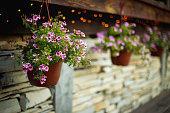 Beautiful summer flowers in a pot
