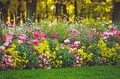 istock Beautiful summer garden 1239839604