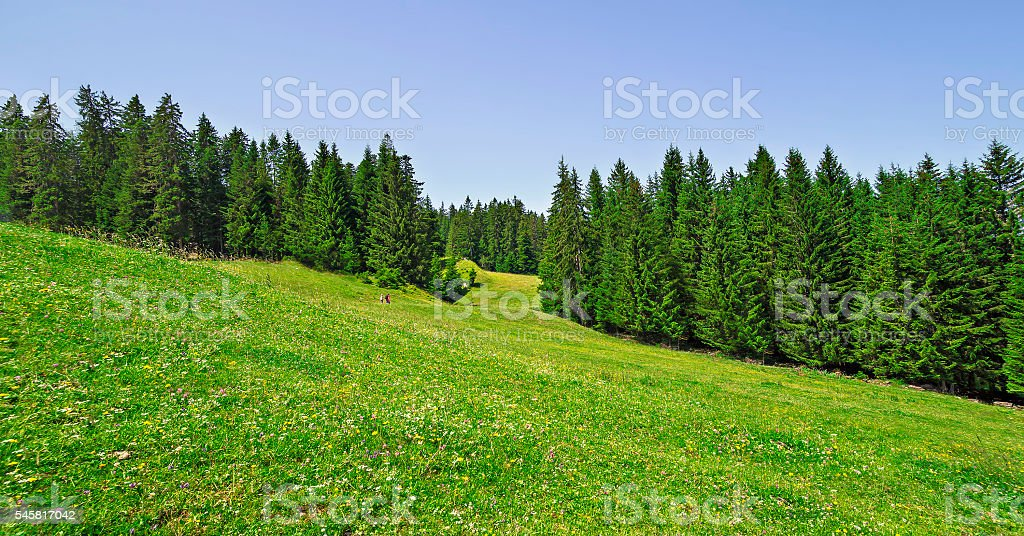 Beautiful summer landscape in the mountains stock photo