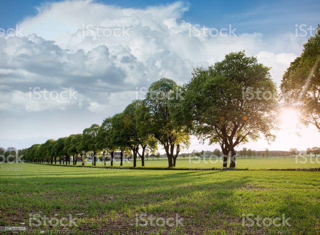 Vackra sommar landskap trädgränd Avenue - Royaltyfri Aveny Bildbanksbilder