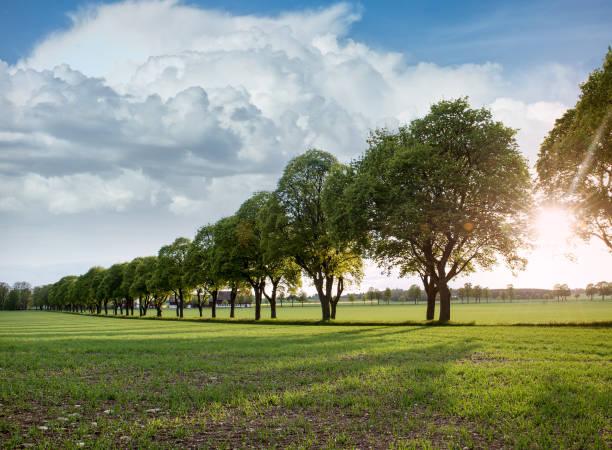 Vackra sommar landskap trädgränd Avenue bildbanksfoto