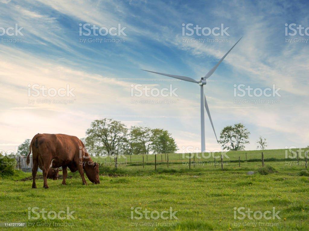 Vackert sommar landskap med ko och vindkraftverk - Royaltyfri Alternativ energi Bildbanksbilder