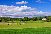 istock Beautiful summer landscape with green Meadow 1133854507