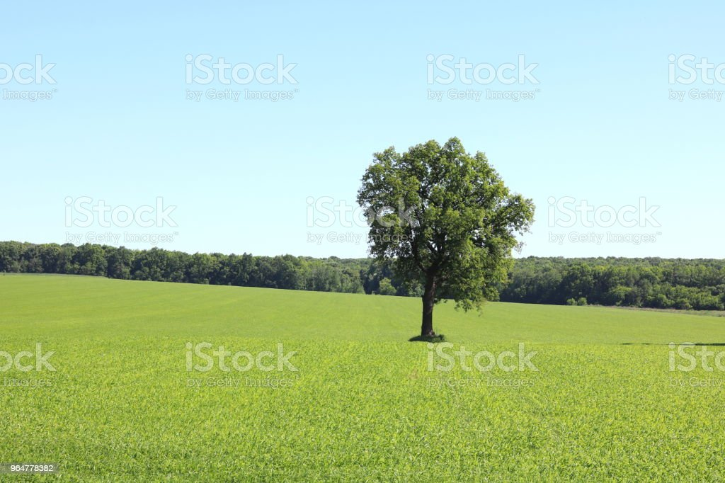 Beautiful summer landscape with lonely tree royalty-free stock photo