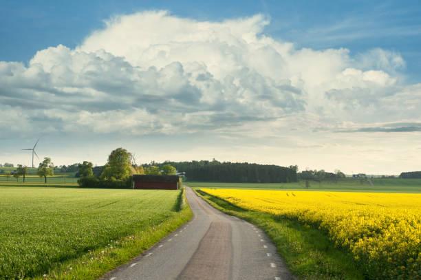 Vackert sommar landskap med rapsolja bildbanksfoto