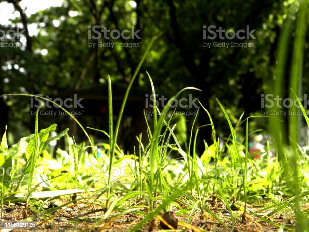 Beautiful summer landscape with yellow trees and sun. Flowers in the park. Fallen leaves closeup nature background