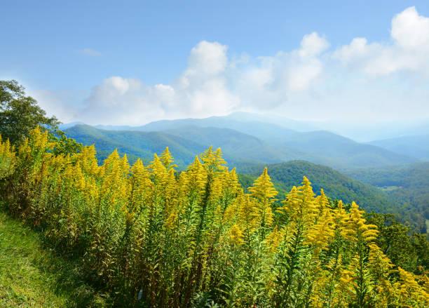 Vista a la montaña verano hermoso. - foto de stock