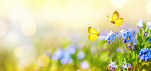 istock Beautiful summer or spring meadow with blue forget-me-nots flowers and two flying butterflies. Wild nature landscape. 1224632214