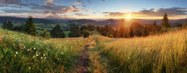 beautiful summer panoramic landscape in mountains - pieniny / tatras, slovakia - footpath stock photos and pictures