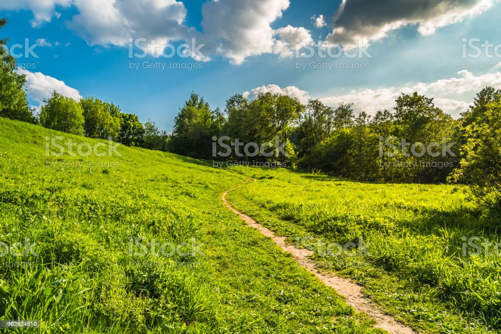 Beautiful summer rural landscape with hills, trees and dirt road - Royalty-free Agricultural Field Stock Photo