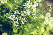 istock Beautiful summer scene with many little flowers. Toned photo. Shallow depth of the field. 903616446