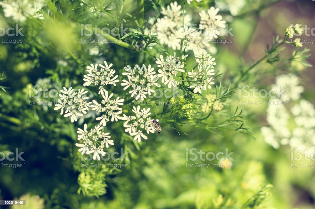 Beautiful summer scene with many little flowers. Toned photo. Shallow depth of the field. stock photo