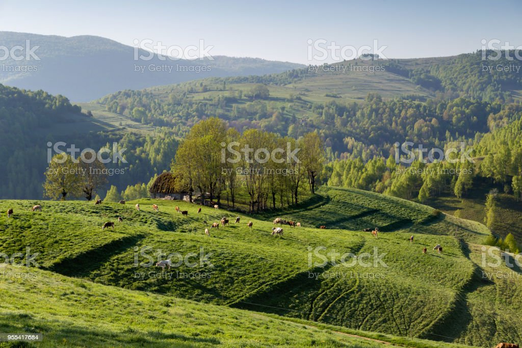 Beautiful summer sunrise in the Transylvanian hills stock photo