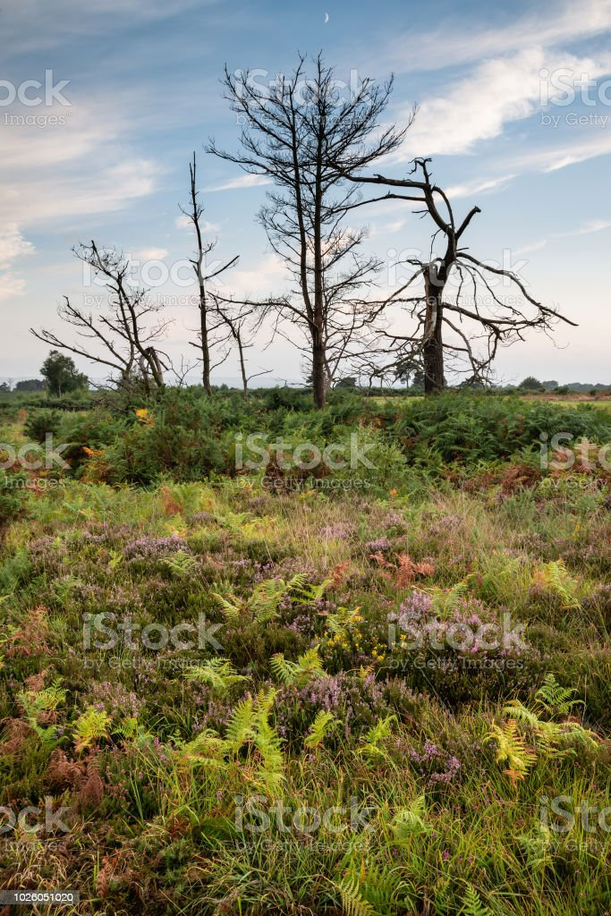 Beautiful Summer sunset landscape image of Ashdown Forest in English countryside with vivd colors stock photo