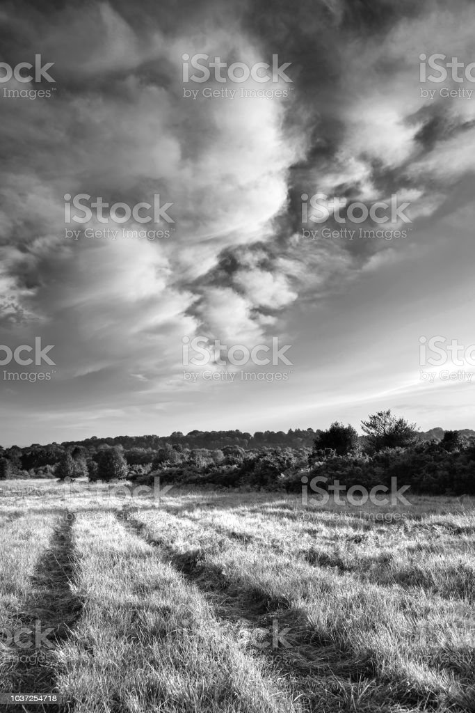 Beautiful Summer sunset landscape image of Ashdown Forest in English countryside black and white image stock photo