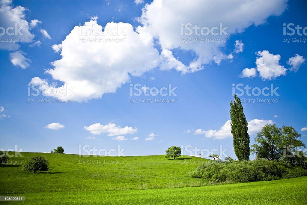 Beautiful Summer Tree Landscape royalty-free stock photo