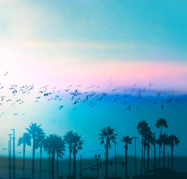 Schöne Sommervibes in Los Angeles. Verschwommene Hintergründe – Foto