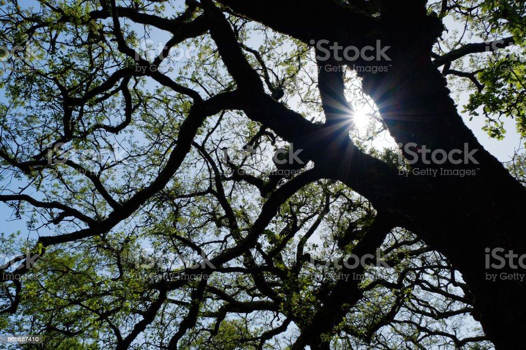 Prachtige glans van de zon door de bomen - Royalty-free Blad Stockfoto