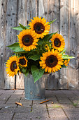 A beautiful sunflower bouquet in front of a wooden wall. Germany