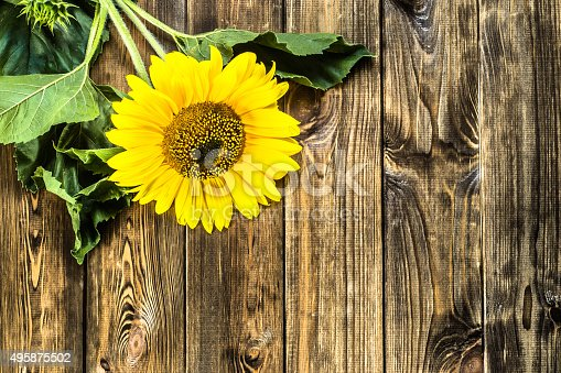 Beautiful Sunflower On Rustic Wood Background Flowers Backgrounds Stock Photo More Pictures Of 2015