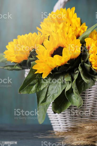 Beautiful sunflowers in white basket on the table autumn background picture id1183152216?b=1&k=6&m=1183152216&s=612x612&h=ubd qeckbnrxbexdwhwj7 fitty82xitk9b3yd4xph8=