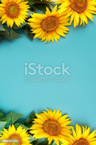 Beautiful sunflowers on blue background. View from above. Selective focus. Background with copy space.