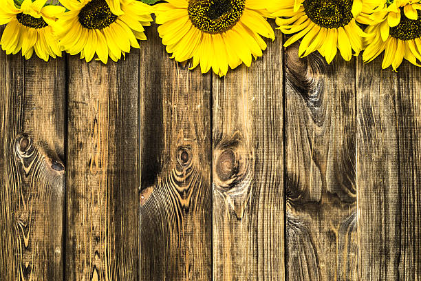 Beautiful Sunflowers On Rustic Wood Background Flowers Backgrounds Stock Photo