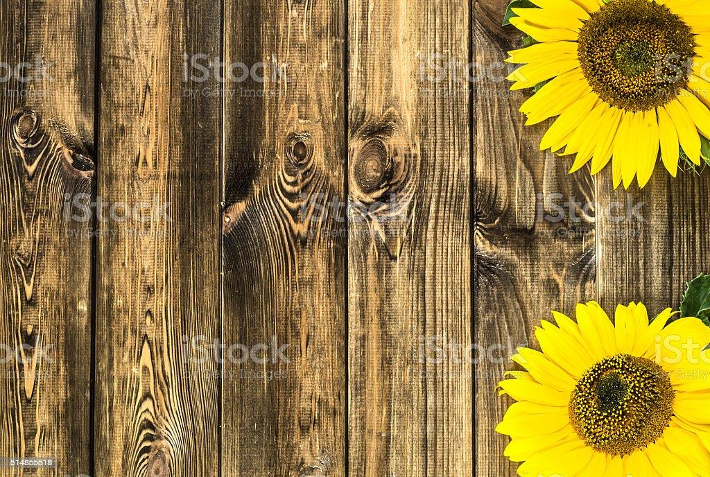 Belle Girasoli Su Sfondo In Legno Rustico Fiori Sfondi Fotografie