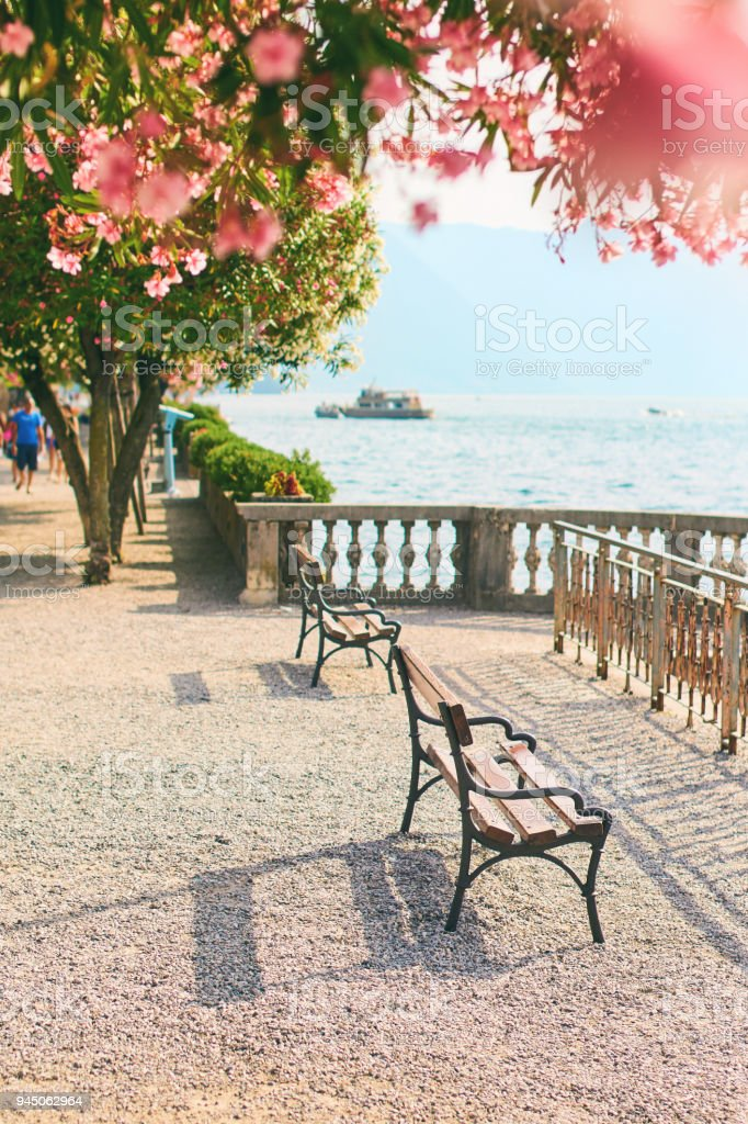 Beautiful sunny summer view of Bellagio town at lake Como in Italy with blooming nerium oleander flowers, ships and boats stock photo