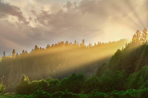 Beautiful sunrise at Redwood National Forest