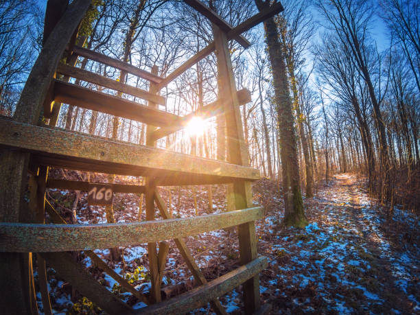 Beautiful sunrise behind a high seat in the forest Beautiful sunrise behind a high seat in the forest high seat stock pictures, royalty-free photos & images