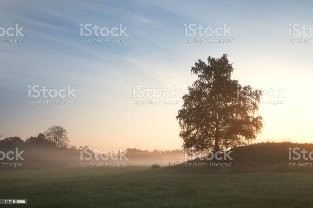 Vacker soluppgång bakom träd i Dimmig morgon i svenskt landskap - Royaltyfri Bildbakgrund Bildbanksbilder