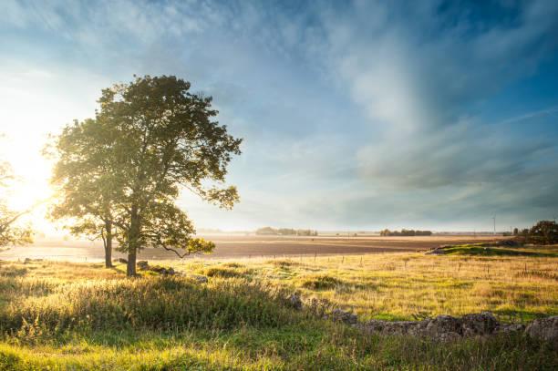 Vacker soluppgång bakom träd i Dimmig morgon i svenskt landskap bildbanksfoto