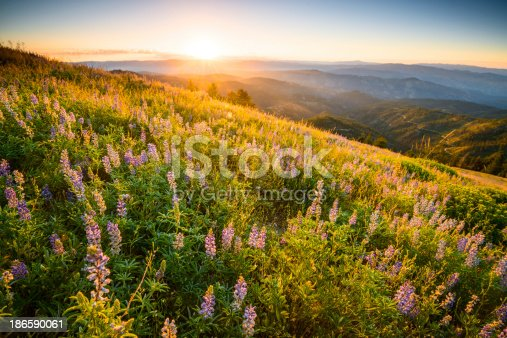 Beautiful sunrise in Idaho mountains in Idaho, USA on a fine spring morning with wild flowers blooming in the foreground