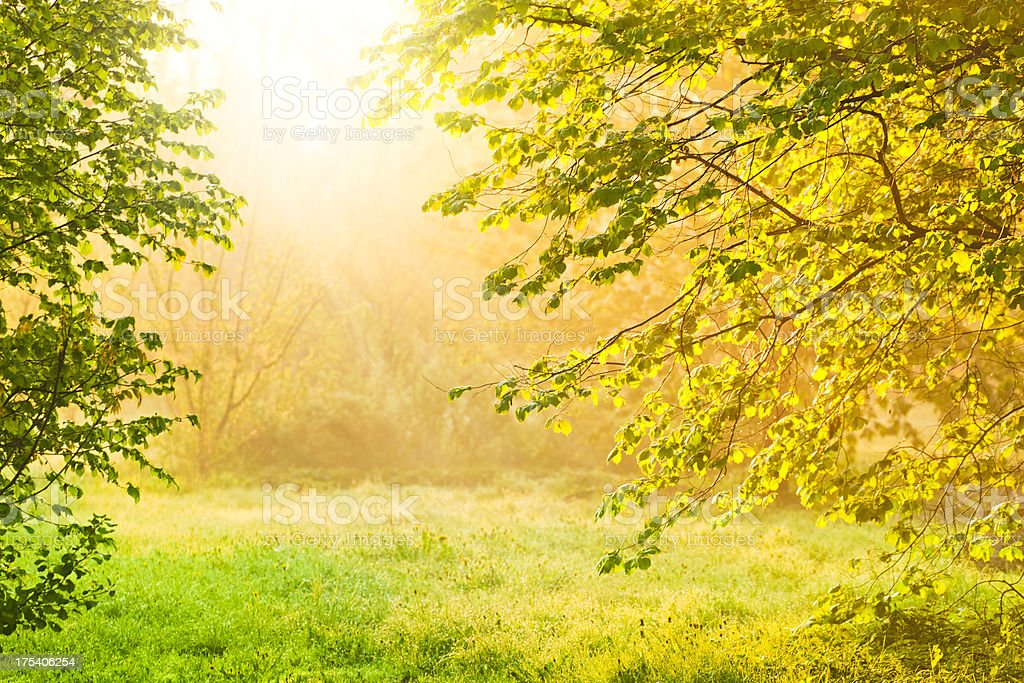 Beautiful sunrise in nature between two trees royalty-free stock photo
