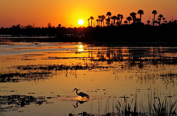 Beautiful Sunrise in Orlando Wetlends Park in Central Florida stock photo