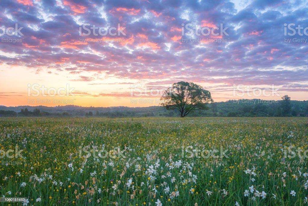 Wunderschönen Sonnenaufgang im blühenden Tal, malerische Landschaft mit wild wachsenden Blumen und Farbe bewölkten Himmel – Foto